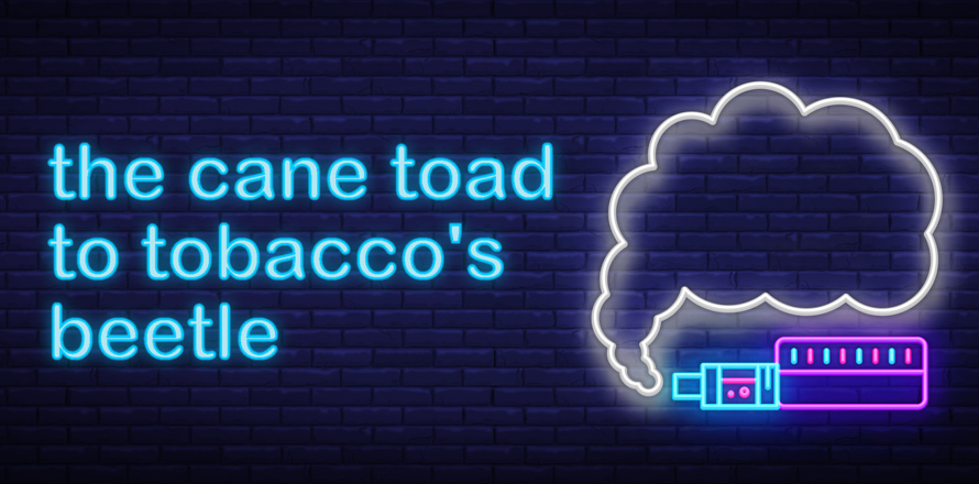 Banner image: The Cane Toad to tobacco's beetle