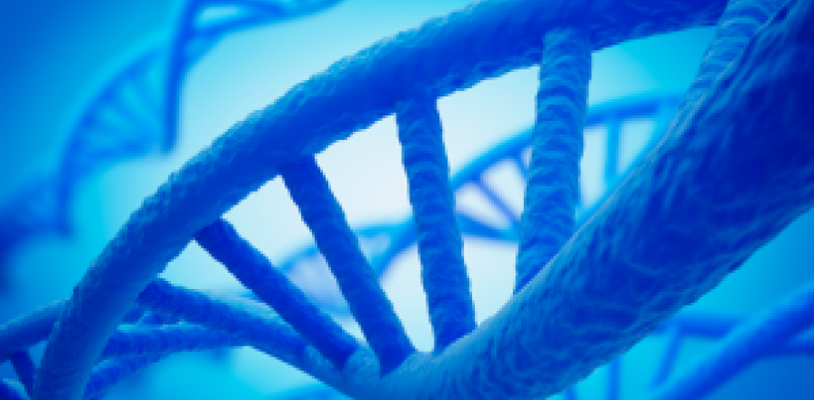 Fil d'une molécule d'ADN