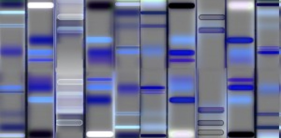 Stock photo of DNA